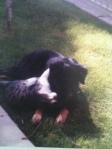 Shonti and kitty cuddling
